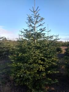 CoCo Christmas Tree
