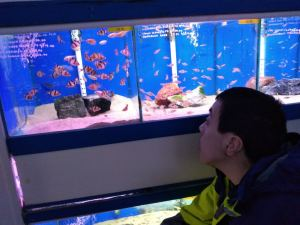 Wednesday 15th January 2020, Self Care and Recreation – Fish Fun!