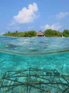 The coral nursery is located right in front of Villa 334