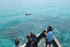 Spotting bottlenose dolphins
