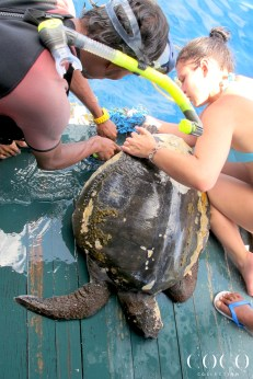 Andy's rescue, rescuing a sea turtle entangled in a net is not always an easy task since the animal is stressed and can be severely injured.