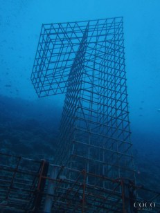 A giant coral nursery in the shape of a ONE was created to mark this event