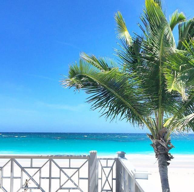 palm tree ocean deck railing cococozy