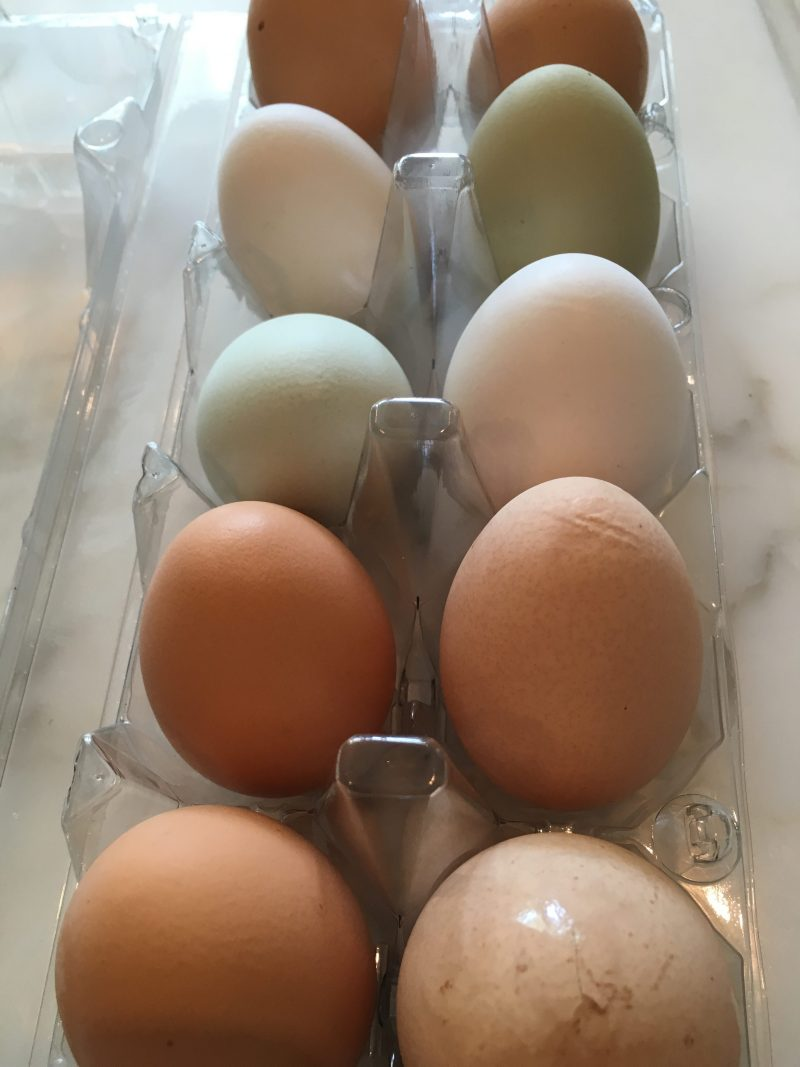 New Orleans Moments Southern Style Louisiana Farm Fresh Eggs Cococozy