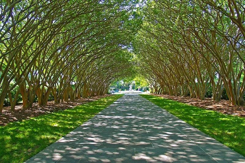 garden allees tree arch dallas