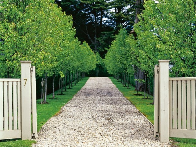 Tree lined gravel walkway