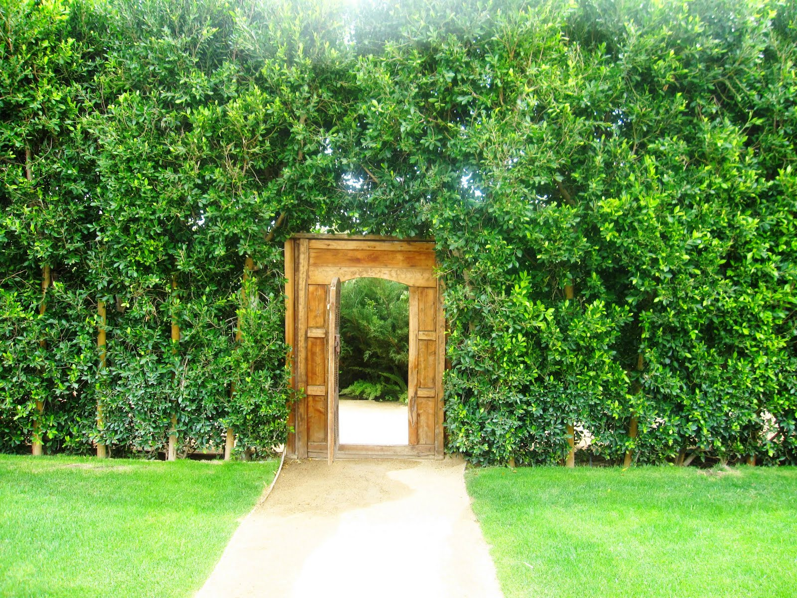 Green ficus surround a wood carved doorway leading to a private garden at the Parker Hotel & WEEKEND PHOTO: BEHIND A SECRET GARDEN GATE! | COCOCOZY