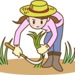雑草に熱湯や塩ってどのくらい効果あるの?土への影響は!