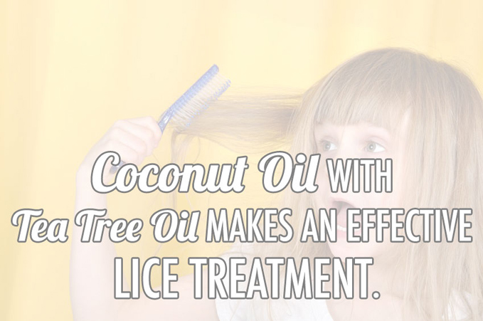 Coconut Oil Lice Treatment Natural Home Remedy Coconut Oil Tips