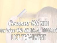 Coconut Oil Lice Treatment Home Remedy