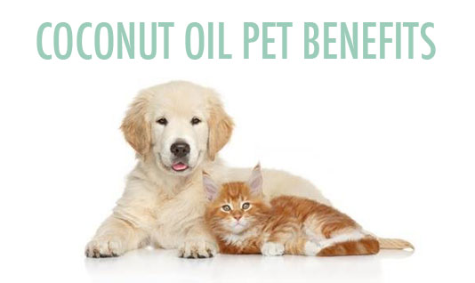 Coconut Oil Pets Benefits for Dogs Cats