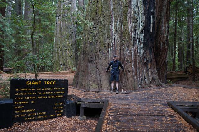 Giant Redwoods, California, USA. Photo: Eeva Routio.