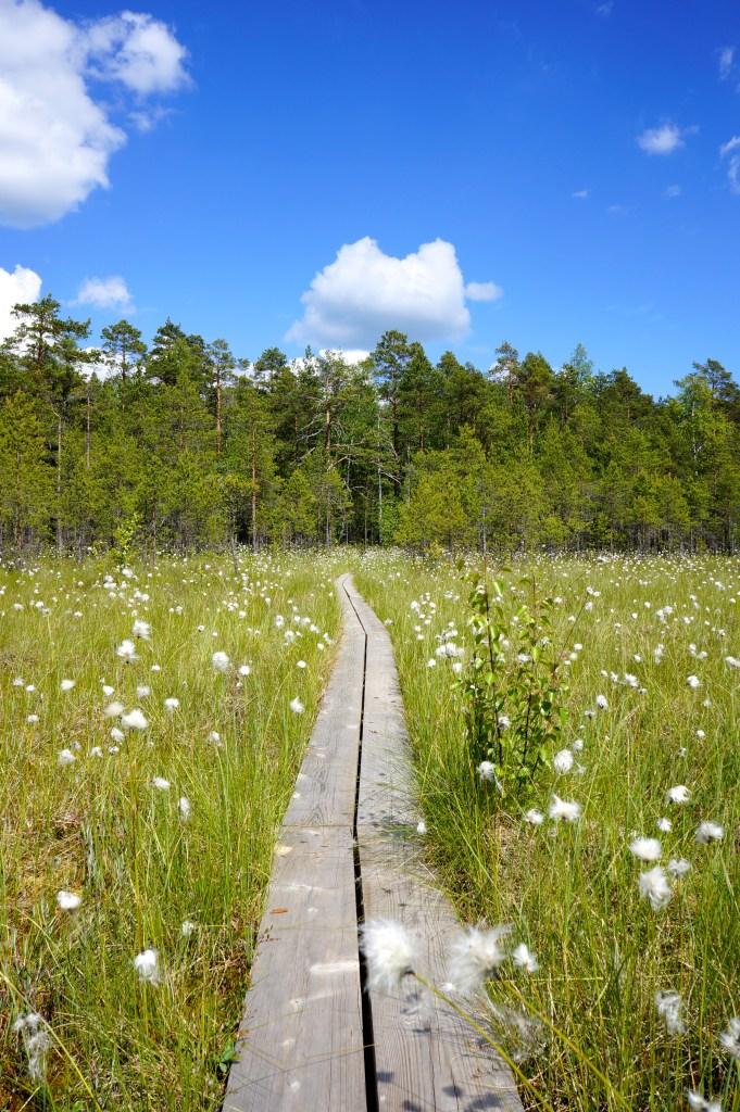 Marshland in Vihti, Finland. Photo: Eeva Routio.