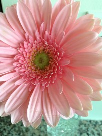 ~ Beautiful flower courtesy of my sister ~