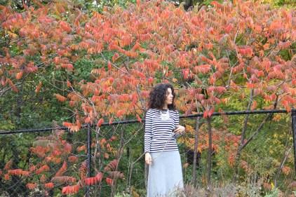 ~ Fall colours ~