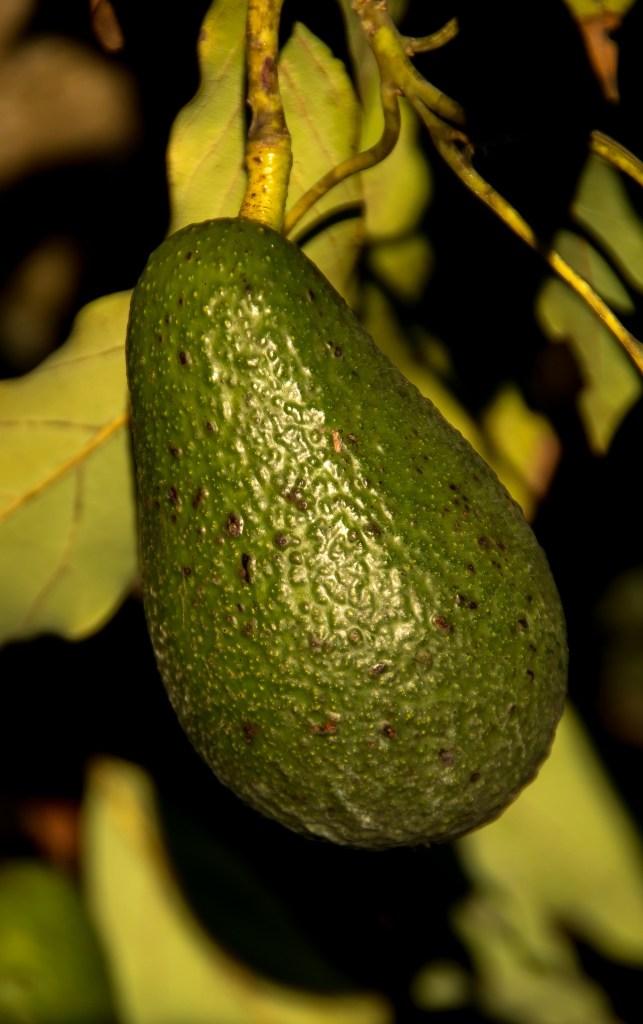 lower cholesterol avocado