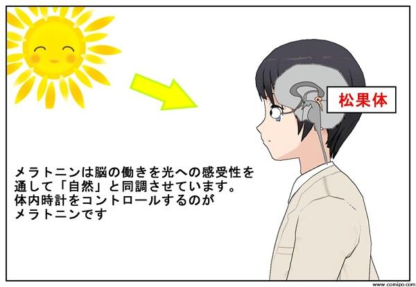 松果体とメラトニン生産システム