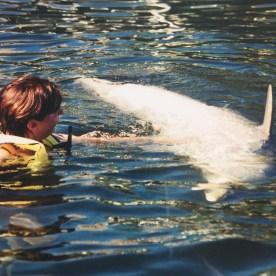 dolphin3