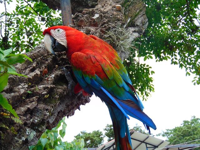 エクアドル、アマゾンのジャングルツアー