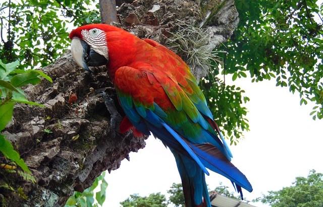語り尽くせない!ジャングルの魅力-エクアドルのジャングルツアー