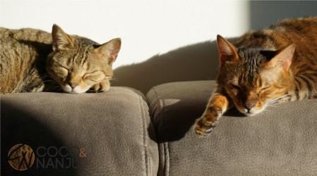 Katzenlog_Coco_und_Nanju_Schlafen
