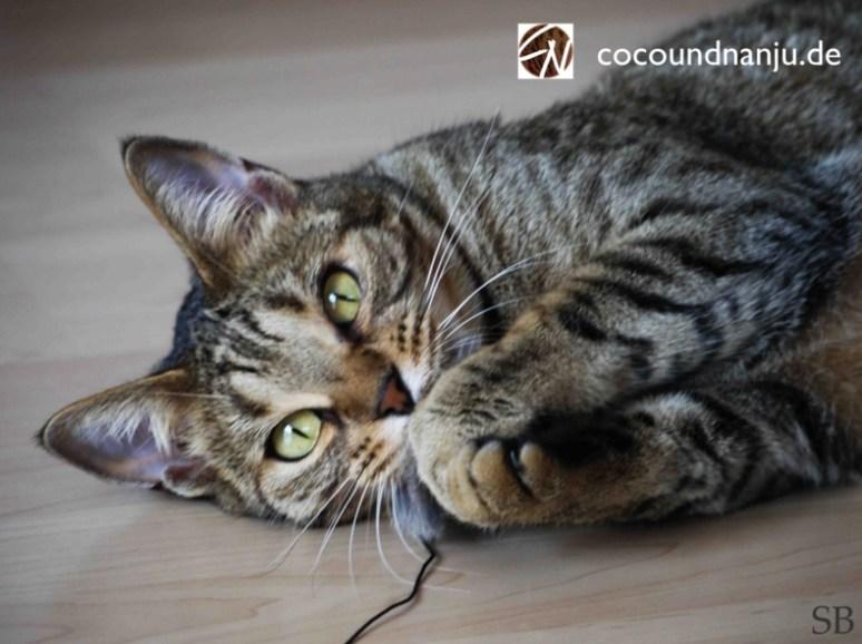 Katzenlog_Coco_mit Maus