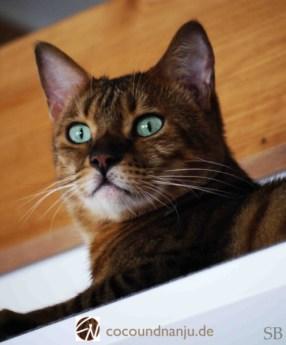 Katzenblog_Nanju_beobachtet