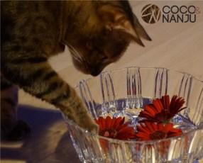 Katzenblog_Nanju_Spielt_mit_Wasser