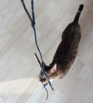Katzenblog_Kartinkreis_Nanju