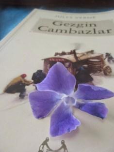 Kuzunun adadan bulduğu çiçeği hediye etmesi
