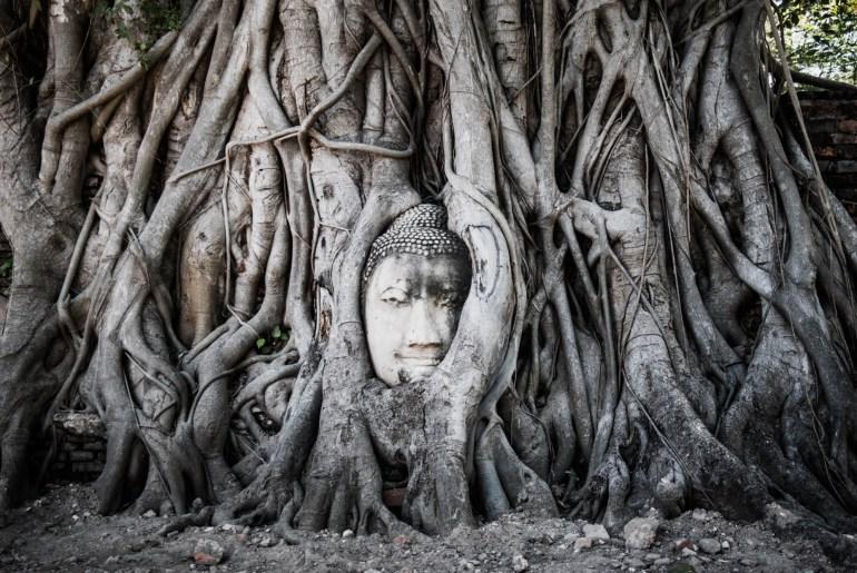 Ayutthaya Embedded head