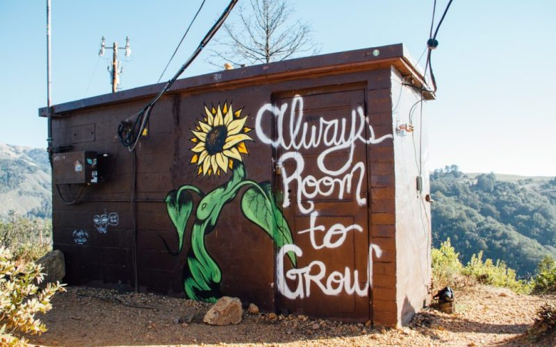 """The small building with sunflower and the quote""""Always room to grow"""""""
