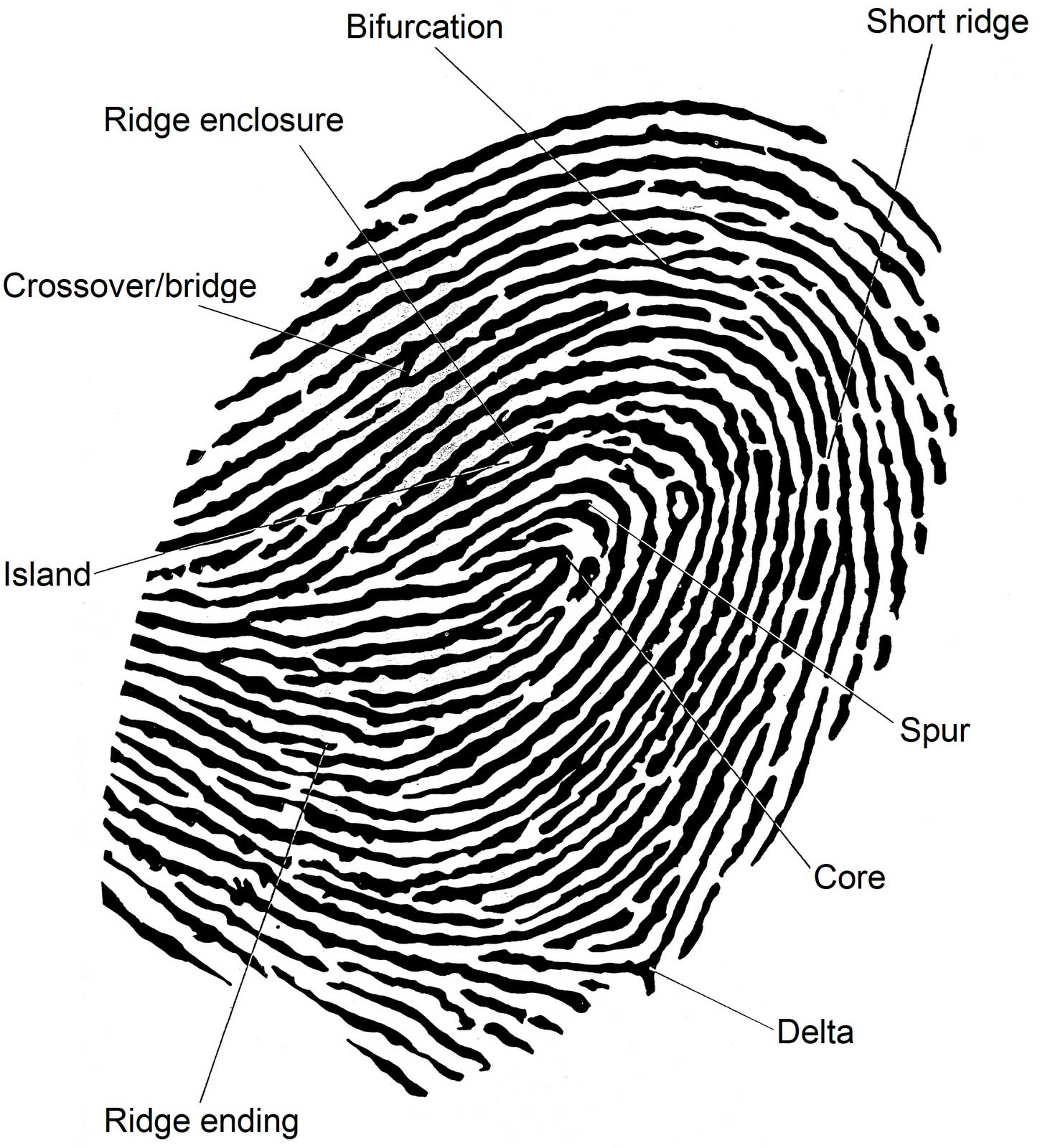 What Is Wrong With The Fingerprint