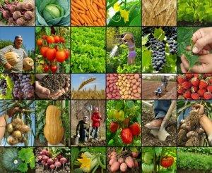 AgriculturaFoto: Shutterstock