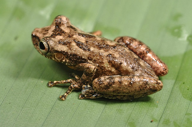 Conservation International team discovered new species