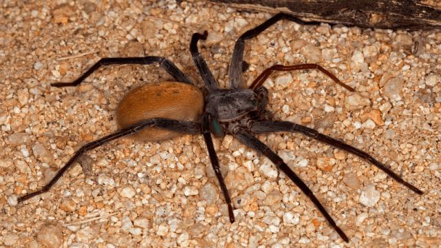 Descubren en México una nueva especie de araña digna de tus peores pesadillas