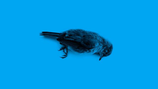 Twitter, un pájaro lesionado en fondo azul