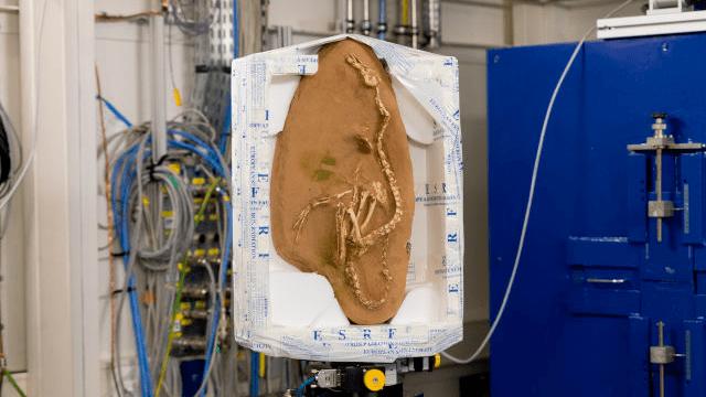 fósil de un extraño dinosaurio en forma de pato.