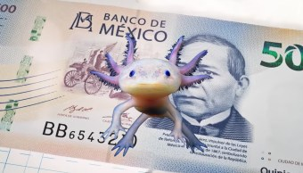 Un ajolote sobre un billete de 500 pesos