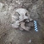 Cráneo del 'Vampiro de Lugnano