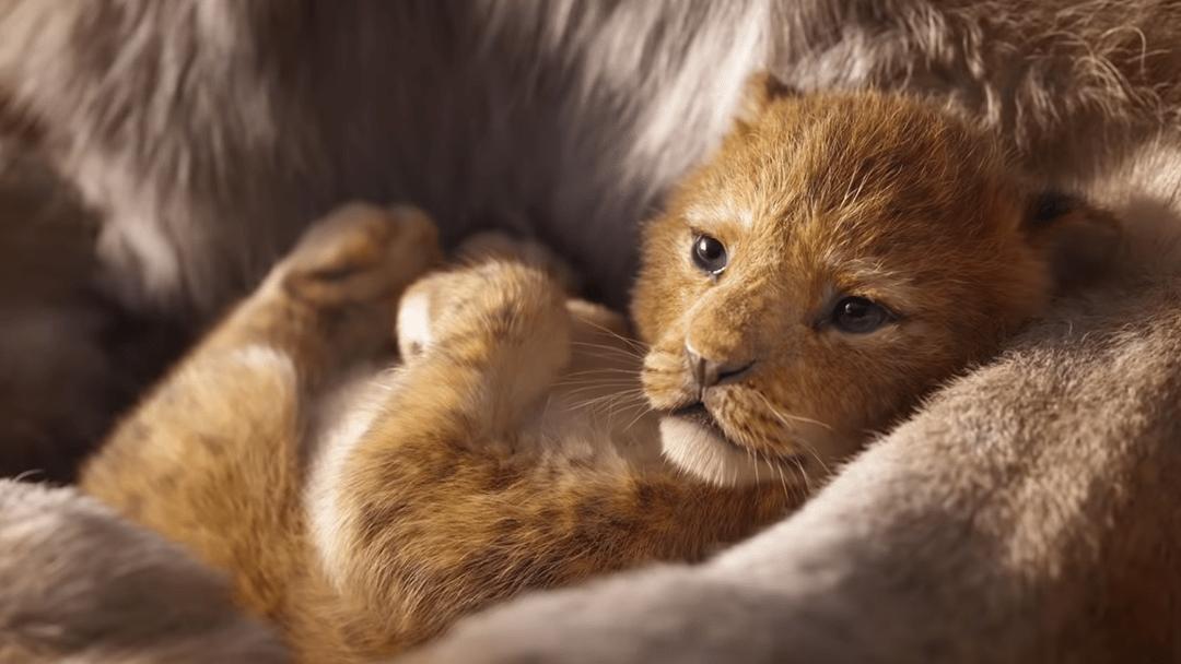 ¡Emocionante! Vea el nuevo trailer de El Rey León