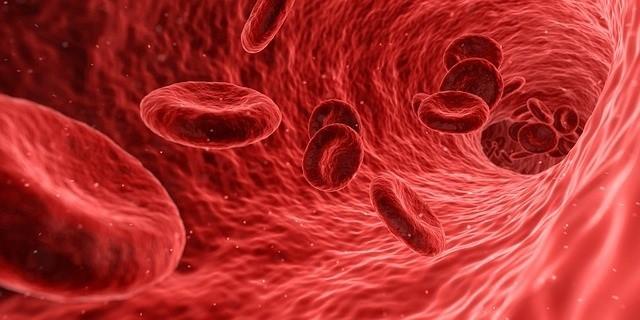 Glóbulos rojos al interior de una vena sangre