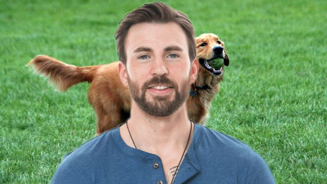 Chris Evans Golde Retriever Twitter