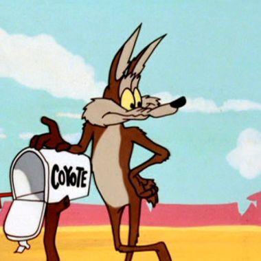 Wilie el Coyote Calamidad