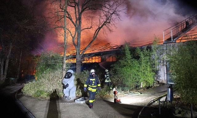 Incendio Gorilas Alemania