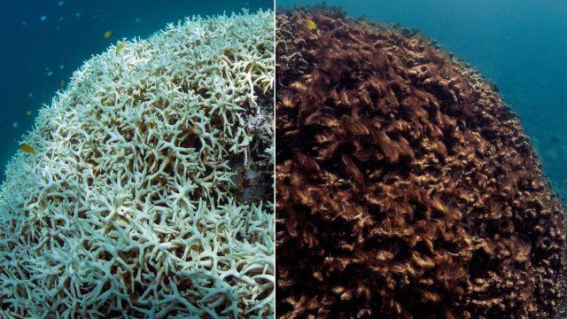 Arrecifes Coral Extinción