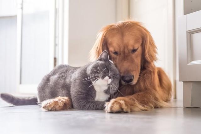 alimento Procesado Perro gato