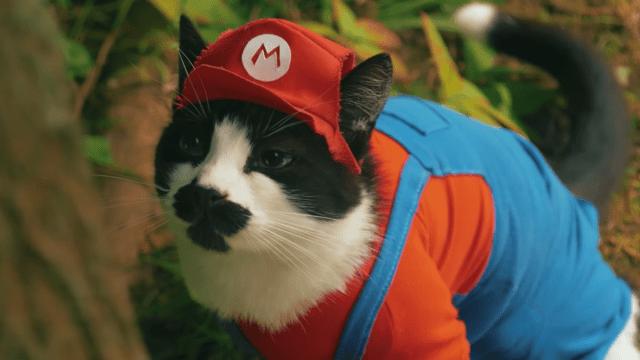 El Super Mario Gato en acción