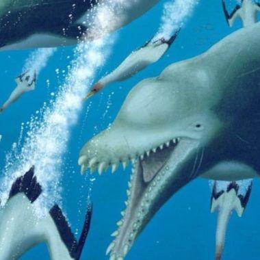 Científicos descubren fósil de delfín asesino gigante