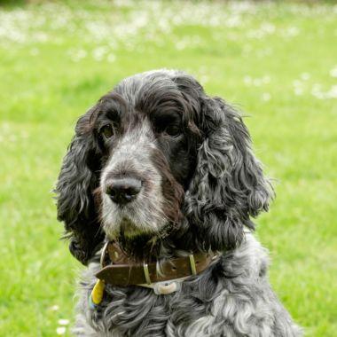 Año de humano no es igual a 7 de perro: estudio científico